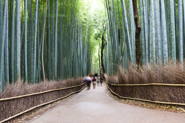 Teach English and Enjoy the Bamboo Forest in Kyoto