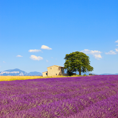 TEFL tourism France
